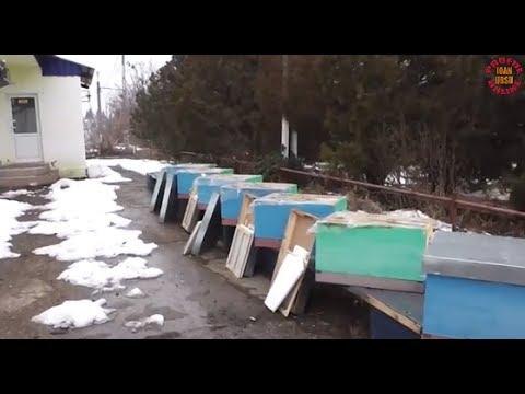 Iernatul stupilor - Hranirea albinelor iarna cu turte din miere cristalizata - Apicultura incepatori