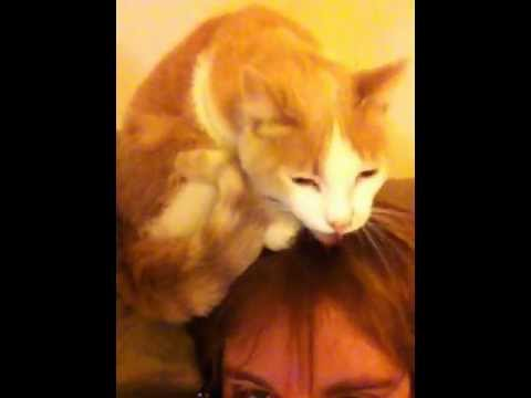 ADDAnonymous an Artist's Blog: Cat Licking the Top of My Head