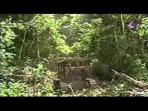 """""""Terribles imágenes deforestación selva del Amazonas 19/05/11"""" EfektoTV Noticias Internacional:"""