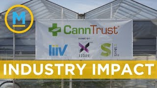 CannTrust's issues could lead to more scrutiny for all cannabis companies | Your Morning