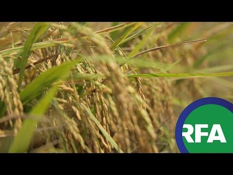 Thương hiệu gạo Việt cần sản phẩm đặc trưng