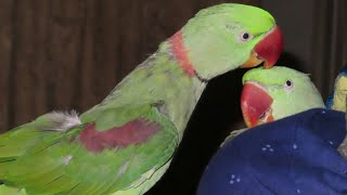 Parrots | Rabbits | baby parrot | full day activities 21\22 July 2019