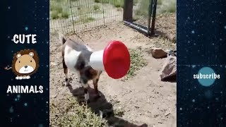 Funny Cats | Funny Farm Animals Stuck Try Not To Laugh   Funniest Animals Videos 2019 | Cute Animals