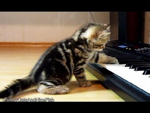 Cute Kittens  Musicians playing piano - UCERQZLRMniqsMlgBxme32cQ