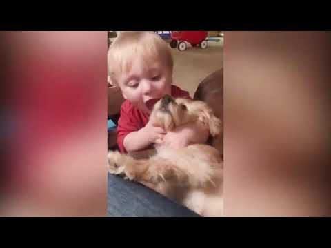 Funny Animals Trolling Babies   Baby and Pets Video