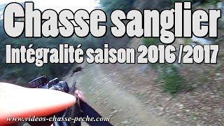 Chasse au sanglier 2016 2017 saison complète