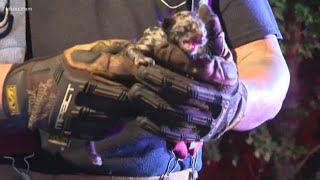 Kitten rescued from large fire in N. Harris Co.