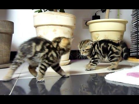 Funny Kittens want to be assassins - UCERQZLRMniqsMlgBxme32cQ