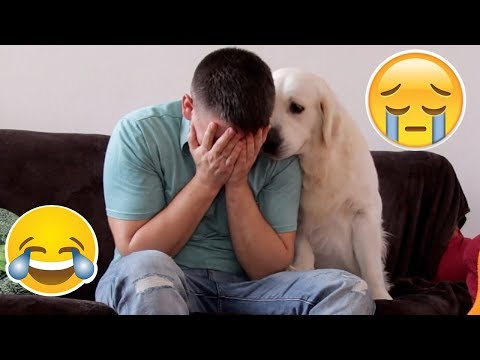Funny Dog Reaction to me Crying - PRANK (BEST REACTION EVER) - UCfOc-5FcQLJeoFZ5wyjWYmg
