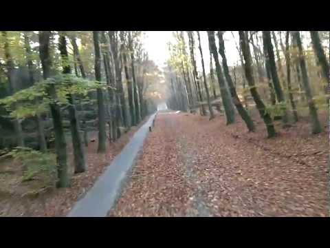 FPV rc plane HD through the woods - UCvK181hMWWkI6_k7OTq5Zgw