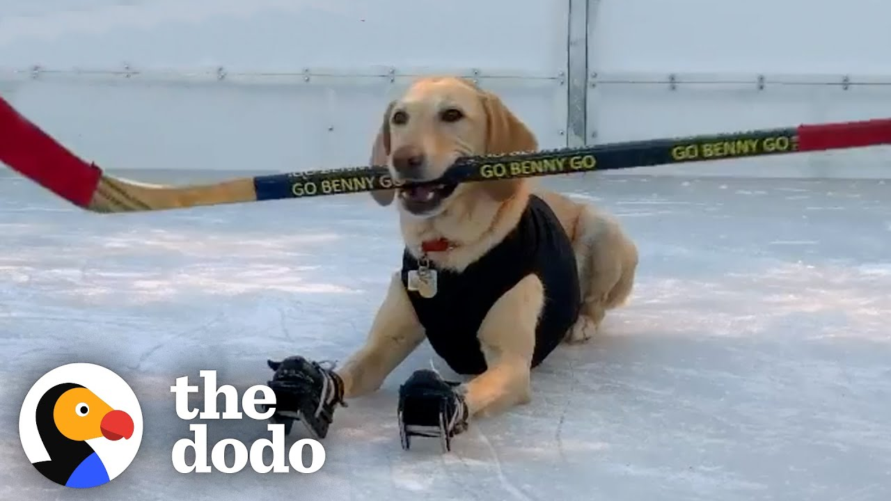 Dog Who's Obsessed With Ice Skating Gets A Special Surprise After Quarantine | The Dodo