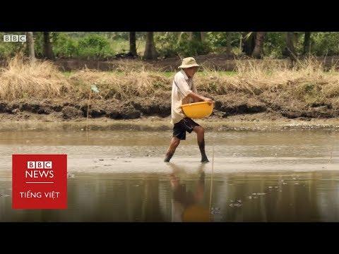 Việt Nam dễ tổn thương trước biến đổi khí hậu - BBC News Tiếng Việt