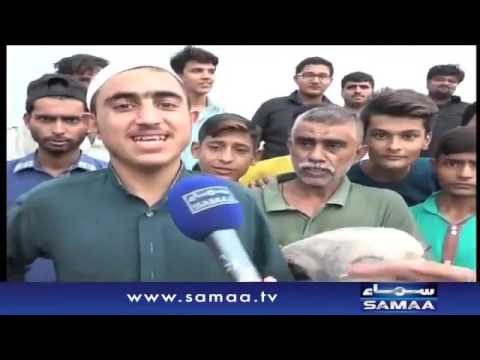 Six Legs Bull In Karachi Sohrab Goth Mandi 2016