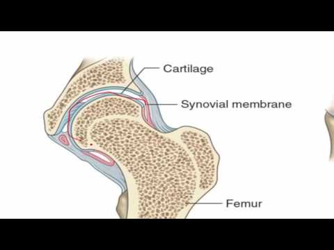 Anatomy 1 | C1 - L2 | Joints of the body