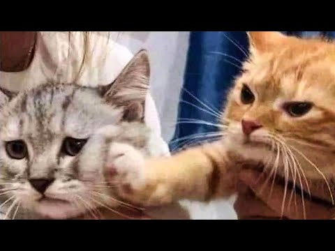 Cute Cats And Dogs Reactions 😹 Animals Doing Funny Things 😆 - UC09IvZwjpunzrdHH1EHok-w