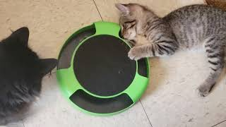 Kitten play time, Kitty Frustration  Cat Toy with Rotating Running Mouse