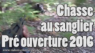 Chasse sanglier 2016 pré ouverture Août (Cévennes)