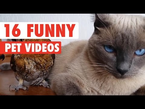 16 Funny Pet Video Compilation 2016 - UCPIvT-zcQl2H0vabdXJGcpg
