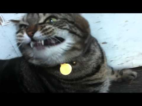 Funny Cat Butt Scratch - UCWLDNBehuayHhQ7rCRJTo7A