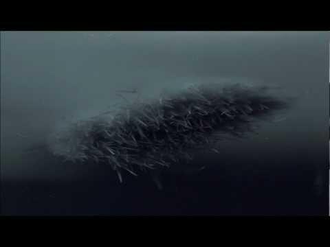 Exoplanet - Archegonium (Original Mix) - UCpx5fu0RswkUZ4koAKB3uJw