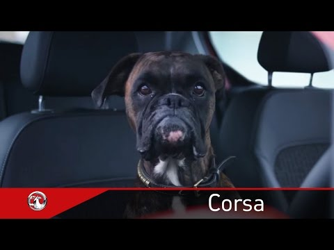 VAUXHALL MOTORS REVEALS THE PAW-FECT PARKING MANOEUVRE WITH #PARALLELBARKING