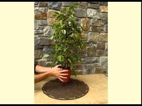 Derviscio - A fashion dress for plants & flowers
