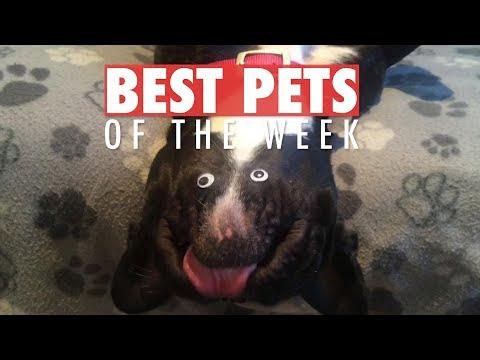 Best Pets of the Week | February 2018 Week 3 - UCPIvT-zcQl2H0vabdXJGcpg