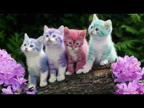 TAHAN TAWA DENGAN KEKONYOLAN HEWAN Kucing lucu bikin ketawa ngakak