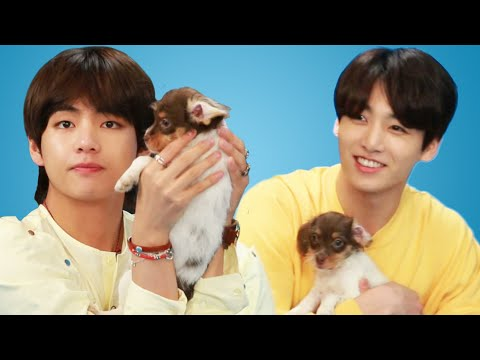 BTS Plays With Puppies While Answering Fan Questions - UCPRUgAl_MV9PajsrG_BmT9w