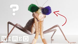 Vision Scientist Explains Why These Praying Mantises Are Wearing 3D Glasses | WIRED