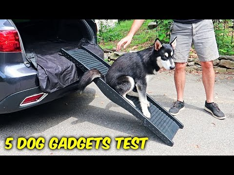 5 Dog Gadgets Put to the Test - Part 7 - UCe_vXdMrHHseZ_esYUskSBw