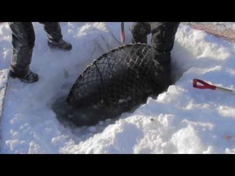 Nome: King Crabbing on Bering Sea Ice - UClIe0yD8xplfFjdwMhOhSTw