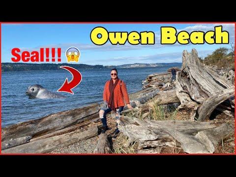 SEALS at Owen Beach Tacoma | Chambers Bay Playground By The Sound | Hiking Washington PNW