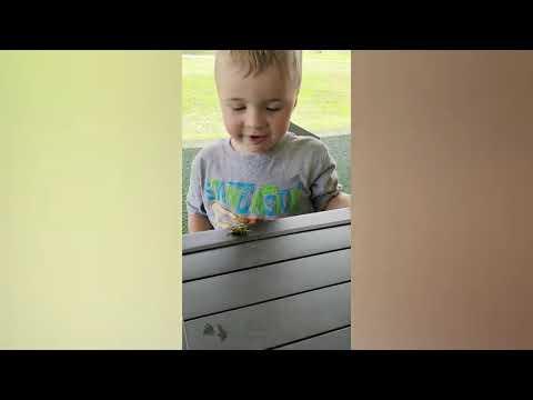 Cute Babies Meet Animals in The Small Garden   Baby Outdoor Videos