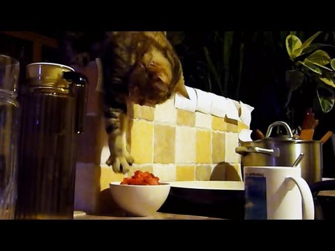 Funny Cat steals her breakfast  Part 1 - UCERQZLRMniqsMlgBxme32cQ