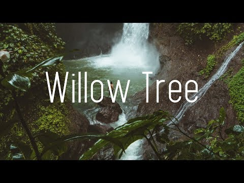 Rival X Cadmium - Willow Tree (Lyrics) ft. Rosendale - UCwIgPuUJXuf2nY-nKsEvLOg