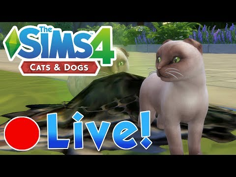 Sims 4: Cats & Dogs • The Mayor's Secret Kittens & Searching Stray Island • Finished Livestream!