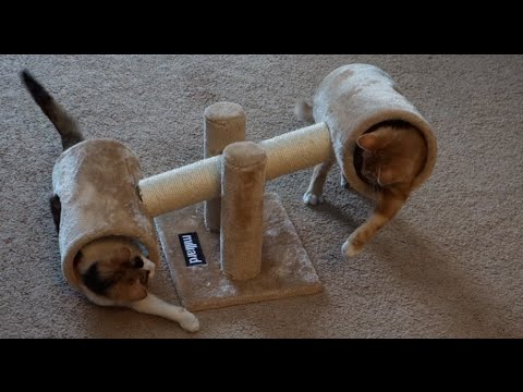 CUTE Kittens Play w/ CRAZY Teeter Totter!  Part 2 - UCUL0uGY2A-rMUhyuXifv4Wg