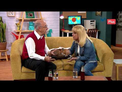 Sit Show - Los Pérez-Gil 35 años después - UCKc2cPD5SO_Z2g5UfA_5HKg