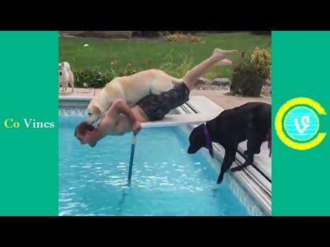 Try Not To Laugh Watching Funny Animal Fails Compilation November 2018 #1 - Co Vines✔ - UC4WNEEzWfK0fJJxxjQ4EYeg