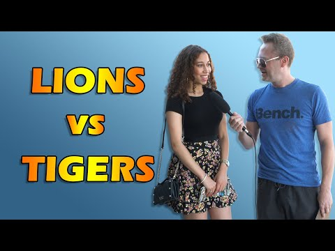 How come Lions and Tigers never get into fights? (Street Interviews)