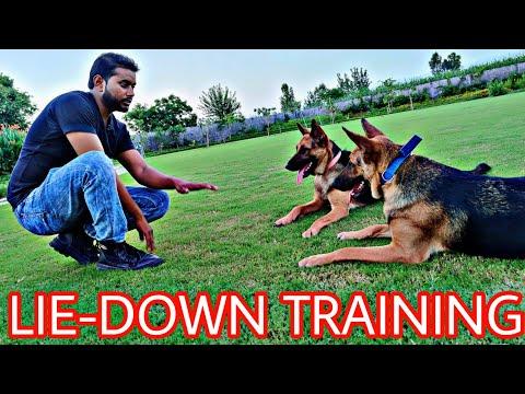 "German Shepherd Training Day 8 : How to train your dog ""LIE DOWN""  Dog Basics in Hindi (Jack & Jill)"