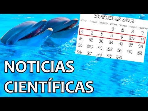 Demostrado: los delfines hablan entre ellos | Noticias 5/9/2016