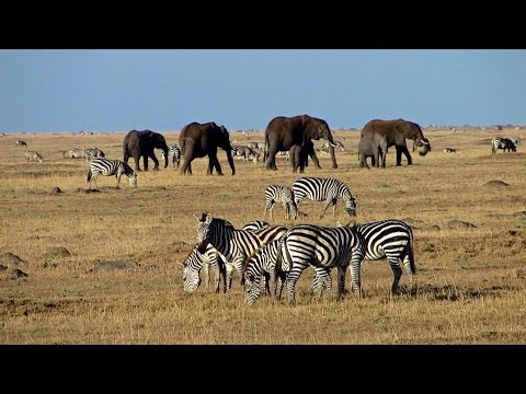 Masai Mara - safari adventure in a wildlife paradise - Predators, big herds and wildebeest migration - UCNudOoof-CFZU4Z6VCc0LRQ
