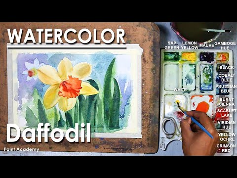 Watercolor Flower Painting : Daffodils