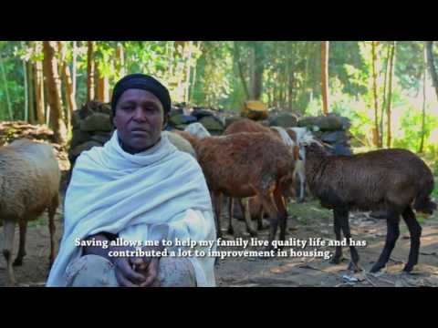 Value Chain Development for improved livelihoods in Ethiopia