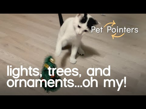 Holiday Decoration Safety Tips | Pet Pointers