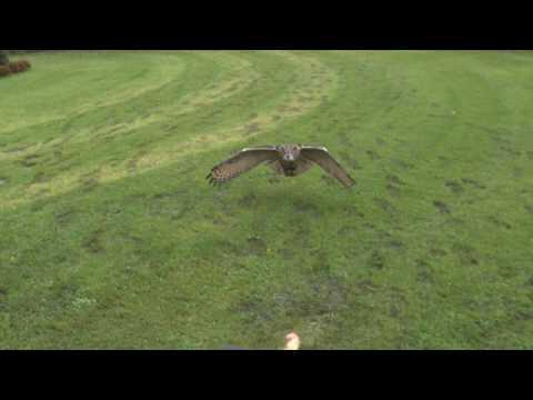 Full HD High Speed Movie - Eagleowl - Photron SA2 - UCTMx76hBV3f9ynEnLY686Bg