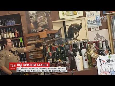 Дикий павич влаштував безлад у крамничці горілчаних напоїв біля Лос-Анджелеса