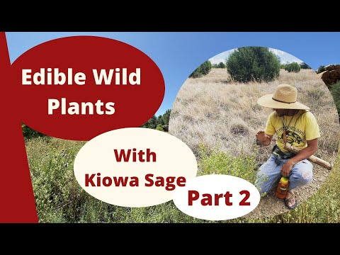 Edible and Medicinal Plants, With Kiowa Sage (Part 2)